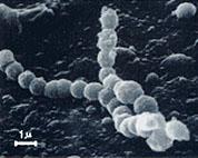 細菌について